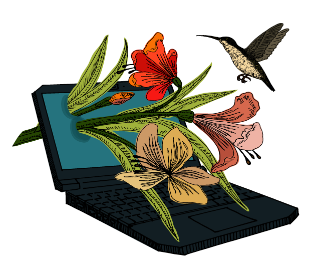 illustration of laptop computer with foliage, flowers and hummingbird